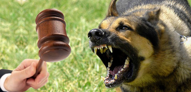 Δύο έτη φυλάκισης σε ιδιοκτήτες σκύλου - 77χρονη πάλεψε να σωθεί από τσομπανόσκυλο