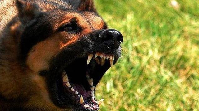 Τραυματίστηκε σοβαρά γυναίκα μετά από επίθεση σκύλων