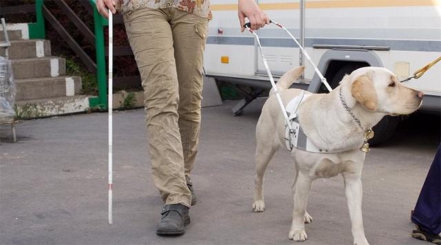Παράδοση σκύλου οδηγού στον Βόλο
