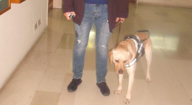 Παραδόθηκε ο πρώτος σκύλος -οδηγός