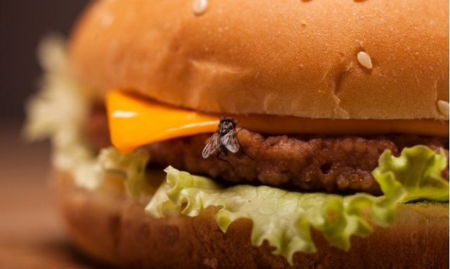 Τι συμβαίνει αν ακουμπήσουν μύγες στο φαγητό. Τι λένε οι επιστήμονες
