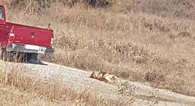 Έδεσε τον σκύλο πίσω από το αγροτικό και τον έσερνε...[εικόνες]