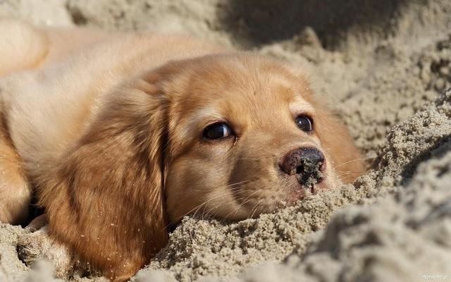 Με δαπάνη του Δήμου τα microchip σε δεσποζόμενα σκυλιά για οικονομικά αδύναμους