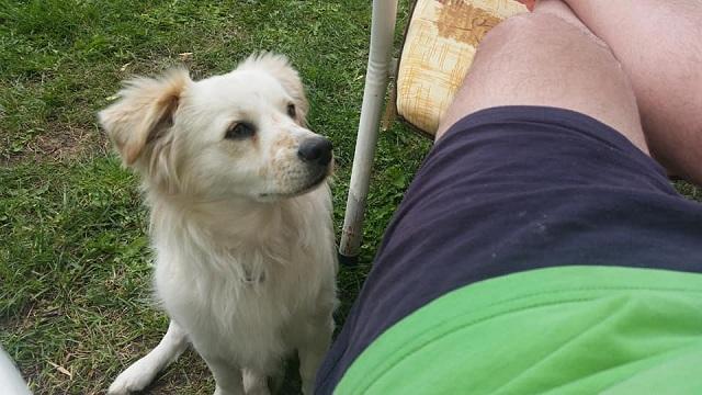 Εσπειραν τραγικό θάνατο σε πάνω από 20 δεσποζόμενα σκυλιά