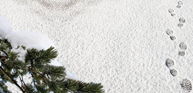 Στα λευκά η χώρα και σήμερα -Πού θα χιονίσει, πού υπάρχουν προβλήματα [εικόνες]