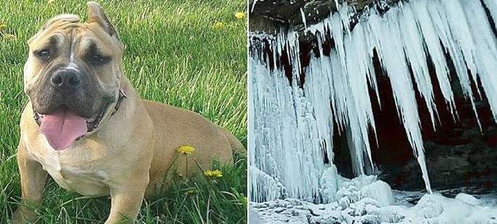 Σκύλος στο Οχάιο βρέθηκε «κατεψυγμένος» στη βεράντα σπιτιού, στους -38