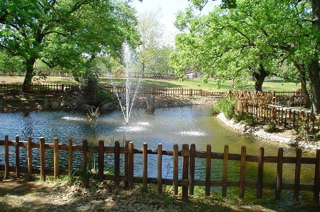 Διαγωνισμός για το κέντρο υποδοχής στο δάσος «Κουρί»