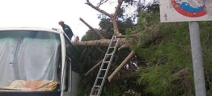 Επεσε δέντρο επάνω σε λεωφορείο στην Κεφαλονιά [εικόνες]