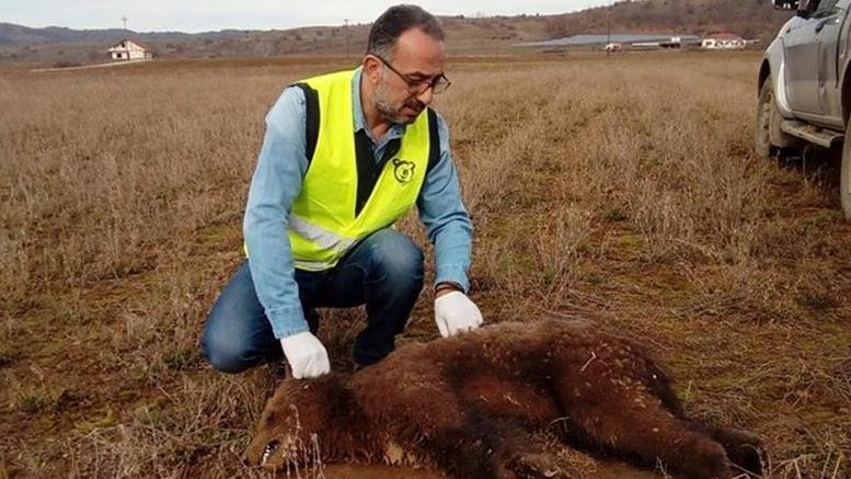 Δητηρίασαν μικρό αρκουδάκι σε χωριό στην Καστοριά