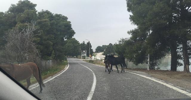 Αλογα έκοβαν... βόλτες στην οδό Πευκακίων