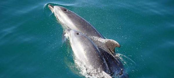 Τα δελφίνια αναγνωρίζουν τον εαυτό τους στον καθρέφτη