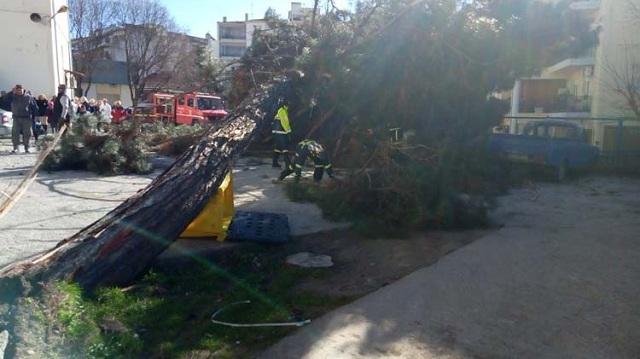 Θηριώδες δέντρο έπεσε πάνω σε αυτοκίνητα στο πάρκινγκ του Νοσοκομείου Λάρισας [εικόνες]