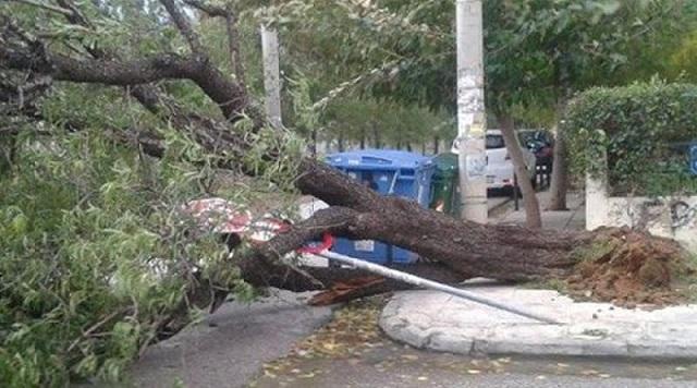 Πάνω από 100 σπασμένα δέντρα στο Πήλιο από τους ανέμους
