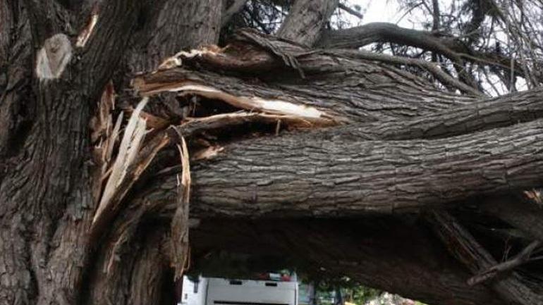 Σοβαρά τραυματισμένος άνδρας που καταπλακώθηκε από δέντρο