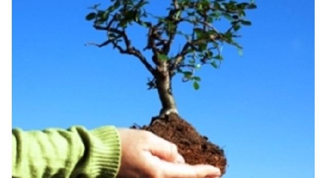 Φυτεύουν το δέντρο της ζωής