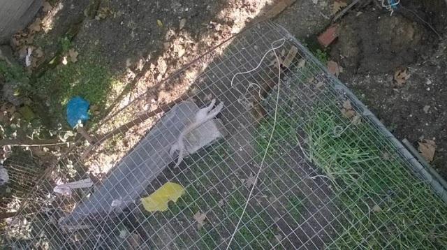Βασάνισαν και σκότωσαν γατάκι στα Τρίκαλα