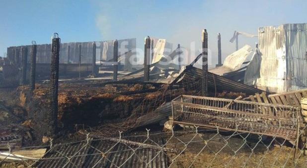 Κάηκαν περισσότερα από 200 ζώα σε ποιμνιοστάσιο στα Φάρσαλα