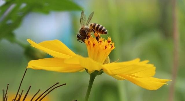 Εχασε τη ζωή της από τσίμπημα μέλισσας...