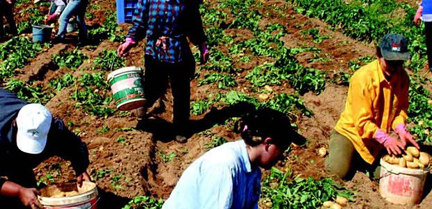 «Ντου» ελεγκτών στα χωράφια της Μαγνησίας