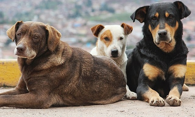 Κτηνιατρικές πράξεις χωρίς άδεια στο Ν. Πήλιο
