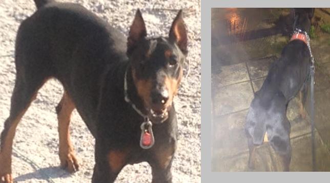 Επιστολή διαμαρτυρίας της κ. Μορφογιάννη για τον σκελετωμένο σκύλο
