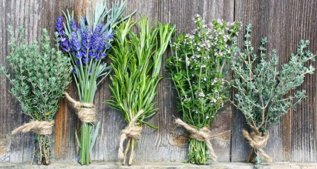 Κέντρο Προστασίας Αρωματικών Φυτών στην Οθρυ