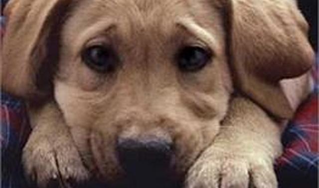 Κρίθηκε αθώος 29χρονος για κακοποίηση ζώου