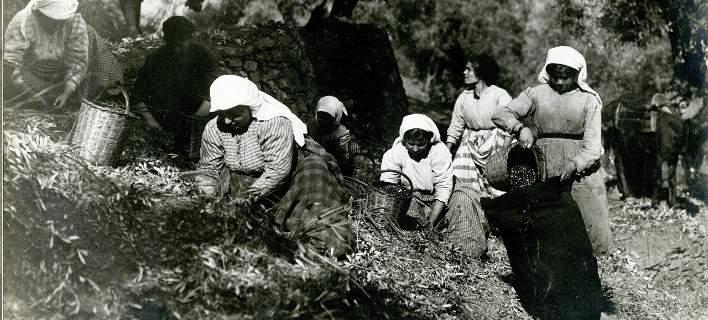 Η τέχνη της ελαιοκομίας στην Ελλάδα στο Πολιτιστικό Ιδρυμα Ομίλου Πειραιώς [εικόνες]