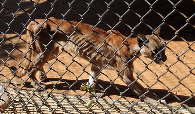 Στο έλεος του λιμού η Βενεζουέλα, τρώνε σκυλιά και αρουραίους [βίντεο]
