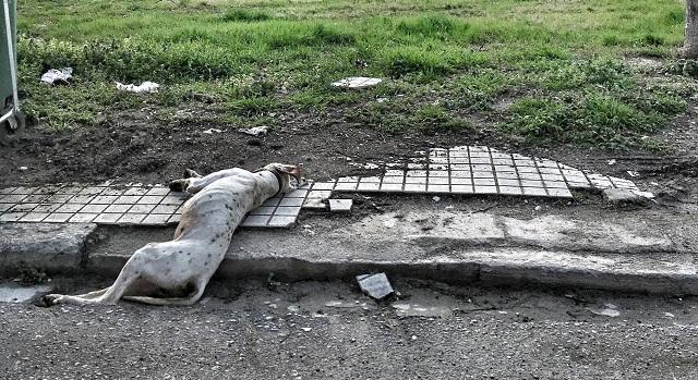 Θανάτωσαν με φόλες αδέσποτα στο Δήμο Ρ. Φεραίου