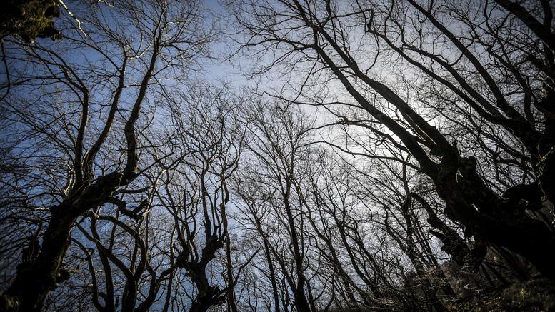 Μέχρι τις 15 Μαΐου η τακτοποίηση αγροτεμαχίων εντός δασικών χαρτών