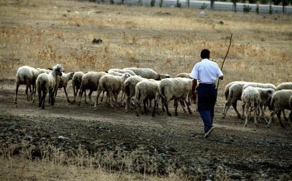 Κραυγή αγωνίας από τους κτηνοτρόφους της Μαγνησίας