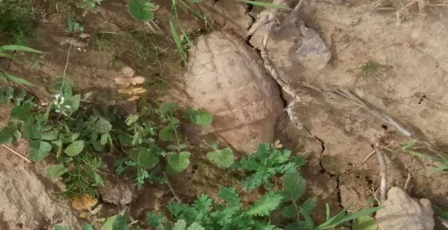 Χειροβομβίδες εντοπίστηκαν στη διάρκεια εργασιών σε χωράφι στην Καρδίτσα