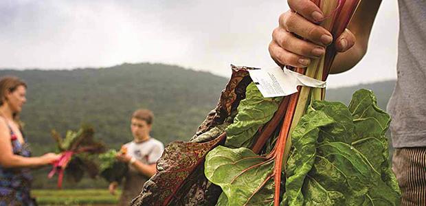 5.000 παραγωγοί και 100 νέοι αγρότες δραστηριοποιούνται στο Πήλιο