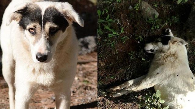 Κριεκούκι Αττικής: Επικηρύχθηκαν οι δολοφόνοι τουλάχιστον 40 ζώων με 5.000 ευρώ