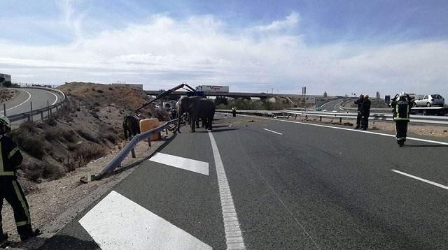 Ελέφαντες βρέθηκαν να περιφέρονται σε αυτοκινητόδρομο στην Ισπανία