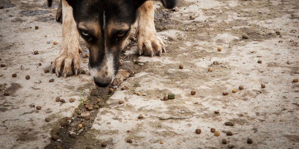 Σκυλίτσα συναντά το «αφεντικό» της μετά από δύο χρόνια & γίνεται viral (video)