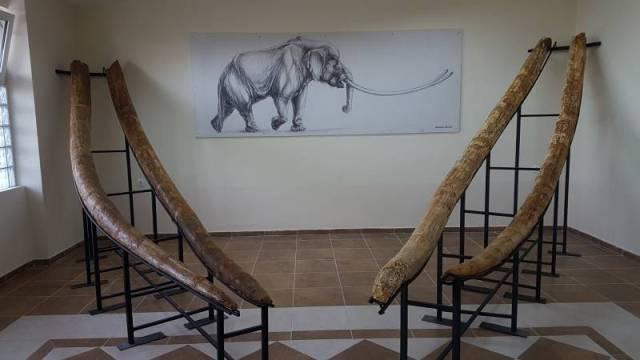 Μαμούθ και ελέφαντες 4 εκατ. χρόνων στα Γρεβενά