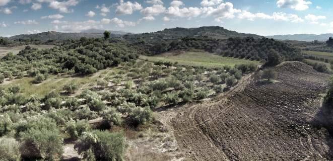 Αγρότες κινδυνεύουν με «ξαφνικό θάνατο»