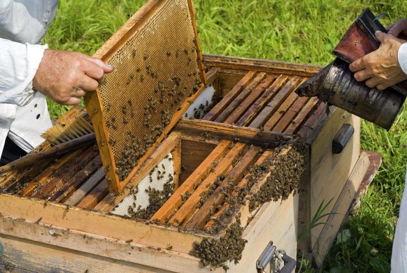Αρπαξαν 43 μελισσοσμήνη παραγωγού στον Αλμυρό