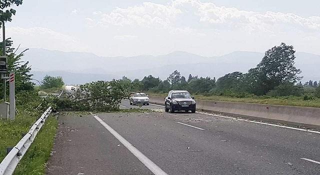 Ενας νεκρός από δένδρο που έπεσε σε εν κινήσει αυτοκίνητο στην Εγνατία