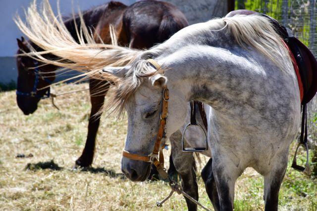 Ναύπλιο: Λιτανεία της εικόνας του Αγίου Γεωργίου με άλογα