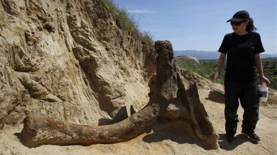 Βρέθηκε προϊστορικός ελέφαντας 8 εκατ. ετών σε χωράφι στα Σκόπια