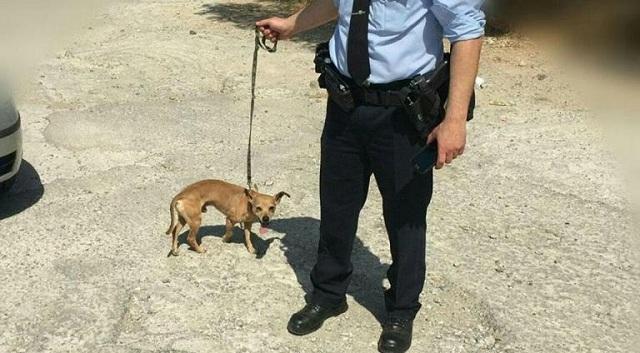 Θύμισε… «Χάτσικο»: Συγκινεί ο σκύλος της 75χρονης που βρέθηκε νεκρή στην Ηλιούπολη