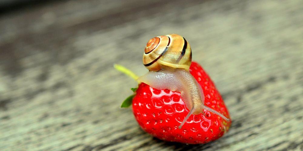 Νέα επιστημονική ανακάλυψη: Δημιούργησαν τεχνητή μνήμη σε σαλιγκάρια