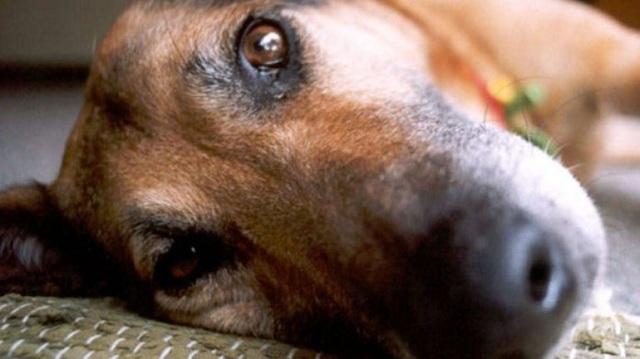 Ποινή φυλάκισης 3,5 ετών σε ηλικιωμένο για πράξεις ακολασίας με σκύλο