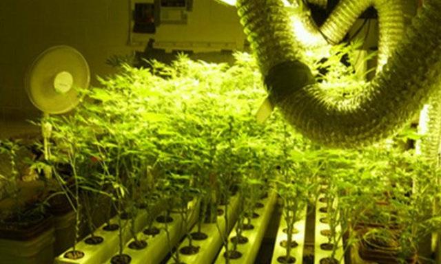 Ζευγάρι Βολιωτών καλλιεργούσε χασίς με την υδροπονική μέθοδο