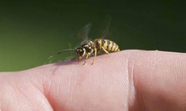 Τσίμπημα από σφήκα ή μέλισσα: Τα σωστά βήματα άμεσης ανακούφισης