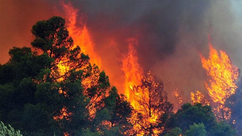 Σε εξέλιξη πυρκαγιά στη Βοιωτία