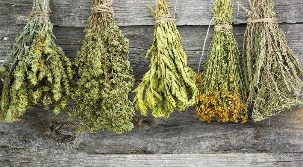 Εξ αποστάσεως δωρεάν μαθήματα για θεραπευτικά φυτά